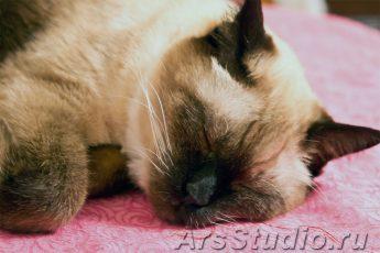 Какие сны видят кошки