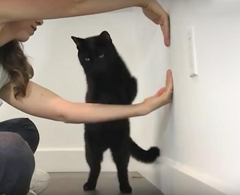 Способ дрессировки кошки