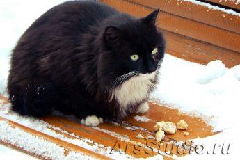 Кошка – домашний доктор