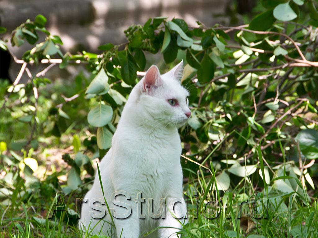 Была ли у Евы любимая кошка